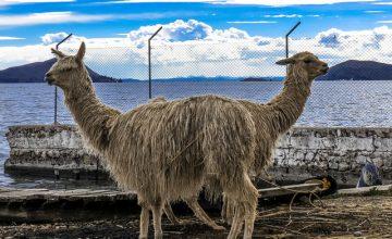 Entrare in Bolivia dal lago Titicaca