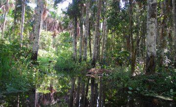 Puerto Maldonado Amazzonia